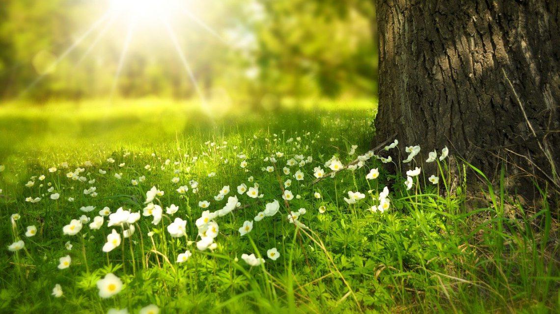Houd de grond in jouw tuin gezond